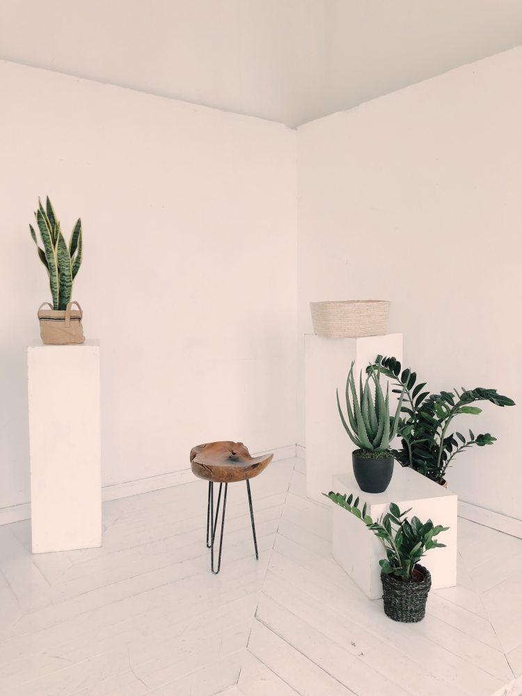 photo-of-plants-near-wooden-chair-1029796.jpg